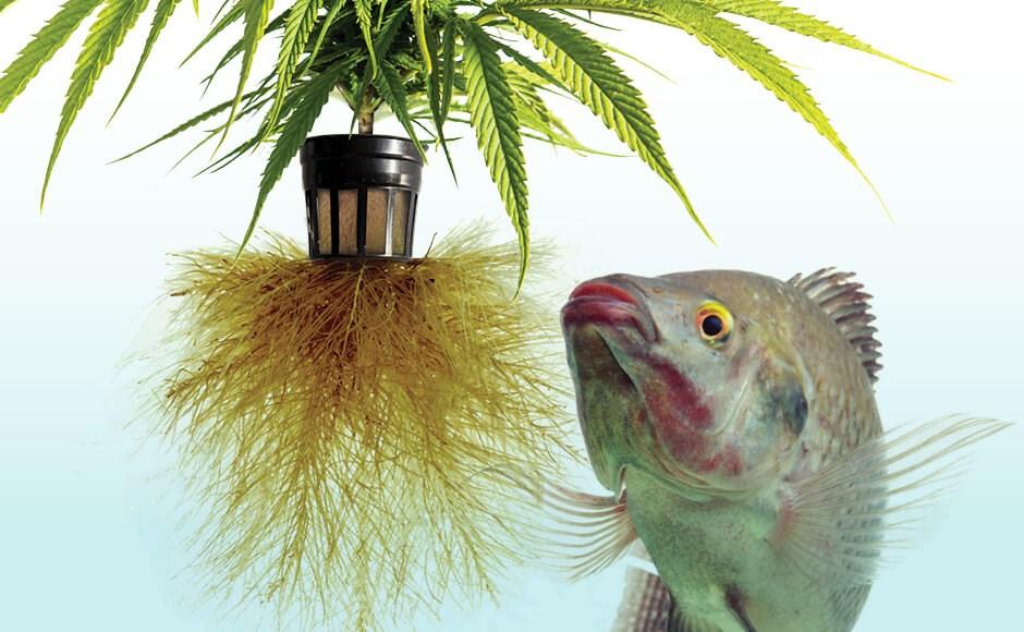coltivazione idroponica, acquaponica, aeroponica