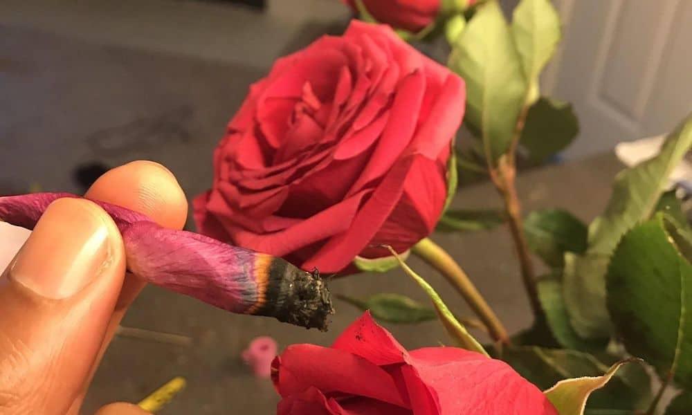 spagna rose rosse cannabis terapeutica